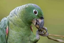 狸哥说:家里饲养鹦鹉需要注意的几个问题
