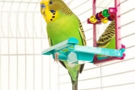 狸哥说:饲养鹦鹉应该选择什么样的鸟笼呢?